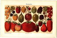 1894 FRUIT BERRY STRAWBERRY GOOSEBERRY CURRANTS Antique Chromolithograph Print