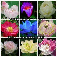 60 Variety Lotus Seeds Bonsai Bowl Nelumbo Nucifera Pond Aquatic Plants Flowers