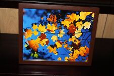8x10 Framed Photography Fall Leafs