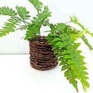 Cylinder Wooden Flower Vase Handmade Natural Eco Friendly Table Pot