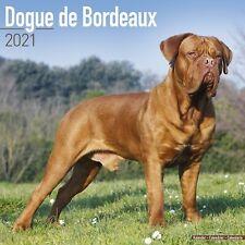 Dogue de Bordeaux Calendar 2021 Premium Dog Breed Calendars