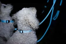 High Vis Dog Collars and Leads  (large collar size) $9