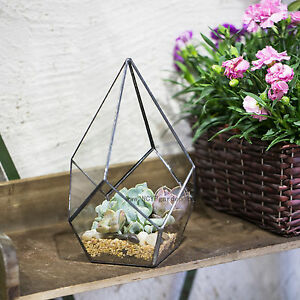 Geometric Terrarium Clear Glass Fern Moss Succulent Lamp Candel Holder Decor