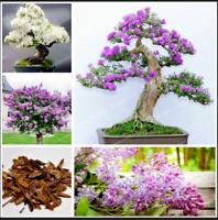 50 Pcs Seeds Lilac Bonsai Clove Flowers Tree Potted Plants NEW 2020 Home Garden