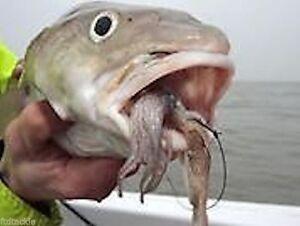 SEA FISHING FROZEN BAIT SQUID MACKEREL MUSSEL LUGWORM BLUEYS SANDEEL CRAB KART