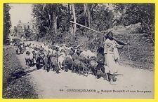 cpa INDIA CHANDERNAGOR BERGER BENGALI et son TROUPEAU Sheep Méssagerie Maritime