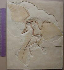 Museum Quality Cast of Famous Archaeopteryx Fossil (Dinosaur -Bird link)