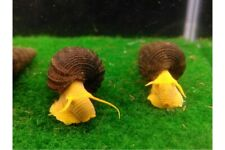 4Rabbit Snail+6Yellow Shrimp+2Red Roots Floaters+2Guppy Gras+Food,Free Shipping