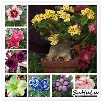 Desert Rose 5pcs True plants seeds Exotic Adenium Obesum Flower Bonsai pla