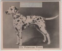 Dalmatian 1930s Champion  Dog Breed Canine Pet Ad Trade Card