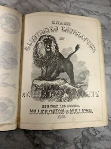 """1855 Antique Illustrated Nature Book """"Encyclopedia of Animated Nature"""""""