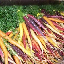 All Weather 200Rainbow carrot Seeds Easy to Plant Yard Vegetable Free Shipping