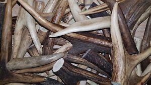 500g of deer antler pieces of different sizes (scraps, waste etc...)