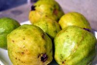 Psidium friedrichsthalium or Costa Rican Guava 10 seeds