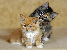 TWO KITTENS BABY CATS PORTRAIT PHOTO ART PRINT POSTER PICTURE BMP2165A