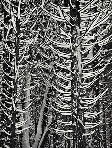 1950s Vintage ANSEL ADAMS Yosemite Winter Snow Trees Landscape Photo Art 12X16
