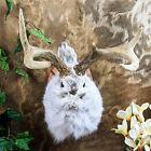 br43 Gaff Taxidermy Oddities Curiosities Jackalope bunny Rabbit collectible