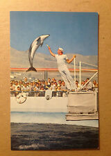 POSTCARD - HIGH JUMPING PORPOISE MARINELAND OF THE PACIFIC  1960's  (2819)