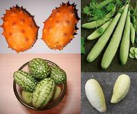 Super Gurken-Samen Mix ***Top Ertrag , Riesige , Kleine und Seltene Gurkensorten