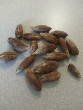 10 Medjool Date Palm Seed.free shipping