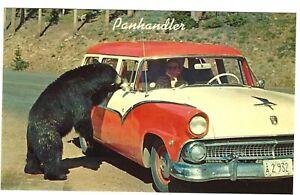 Black Bear Panhandler at Car, Yellowstone National Park, c1950s Unused Postcard