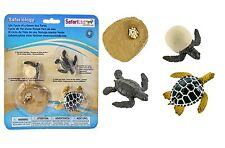 S662316 Safari Wissenschaft - Lebenszyklus einer Meeresschildkröte (Set)