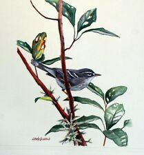 Dominica WWF Birds of the Caribe PANEL PASTILLA Premier Día 1° FDC 827