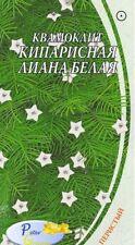 graines de Ipomoea quamoclit Lianel de cyprès blanc - Quamoclit  - Star glory