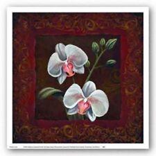 Orchid Study II Thomas Wood Art Print 12x12