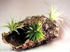 Cork Bark Tube-Display comes with Artificial Air Plants