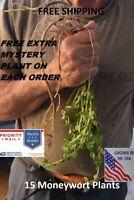 15 moneywort plant plants live aquarium plants aquascaping planted tank easy
