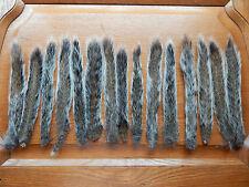 15 Dried Grey Squirrel Tails Taxidermy Fly Tying