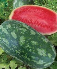 Rare Watermelon Dlinnomer F1 Seeds Ukrainian Hybrid NON GMO