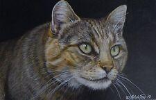 Original Zeichnung Katze Farbstiftzeichnung original drawing cat chat gato