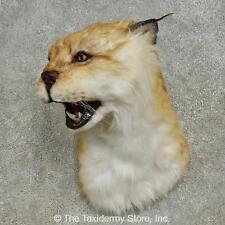 #16610 E+ | Reproduction Eurasian Lynx Shoulder Taxidermy Head Mount