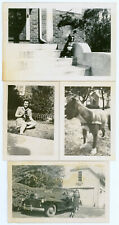 Vintage 1940's 1950's Canine Snapshot Photos Boston Terrier Dogs Puppy Lot of 4