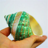 Green Turban Shell Conch 11cm Fluorescent Spiral Shells Polished Nautical Decors