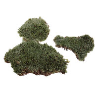Greenery Scenery Moss Lichen Model for 1/35 Miliatry Sand Armor Building Toy