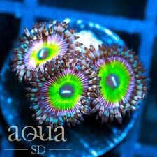 New listing Asd - 092 Sour Melon Zoanthids - Wysiwyg - Aqua Sd Live Coral Frag