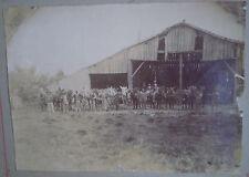 PHOTOGRAPHIE ANCIENNE/ RAYE-EN-AUTHIE (Somme) ?/  CULTURE DU TABAC vers 1900