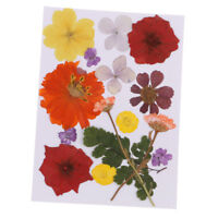 Multi Mix Real Press Flower Dried Flower Leaves for Scrapbooking Arts Crafts