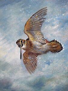 WOODCOCK A. Thorburn bird sky fly Tile Mural Kitchen Backsplash Marble Ceramic