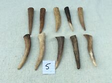10 Red Deer Antler Tines for Crafts, Jewellery, Pagan No.5