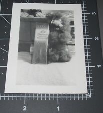 ABSTRACT Early SMIRNOFF VODKA BOX French POODLE Toy DOG Still Life Vintage PHOTO