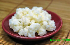 Organic milk Kefir grains live(not dried),κεφίρ,caucasian,probiotic, tablespoon