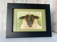 Jacob's Sheep Framed Mini Print from my Own Watercolour Pet Portrait Painting.