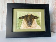 Suffolk Sheep Framed Mini Print from my Own Watercolour Pet Portrait Painting.