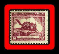 FAUNA, CHINCHILLA, CHINCHILLA LANIGER, CLAUDIO GAY BOOK, MNH, AIR MAIL, 1948