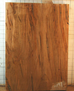 1 piece Ambrosia Maple Guitar Body Blank 14.4 x 20 x 1.76    10.5 pounds