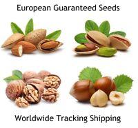 European  Seeds Almond - Hazelnut - Pistachio - Walnut   *Guaranteed Tree Seeds*
